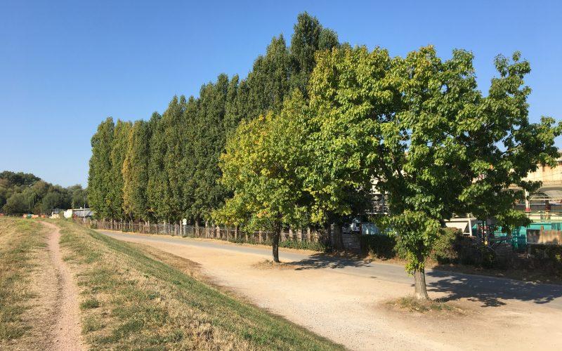 Wohnen in Ingelheim am Rhein